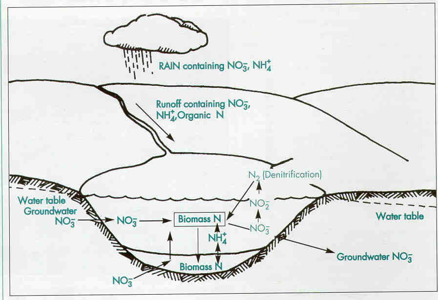 Different ways of nitrogen entry into a lake